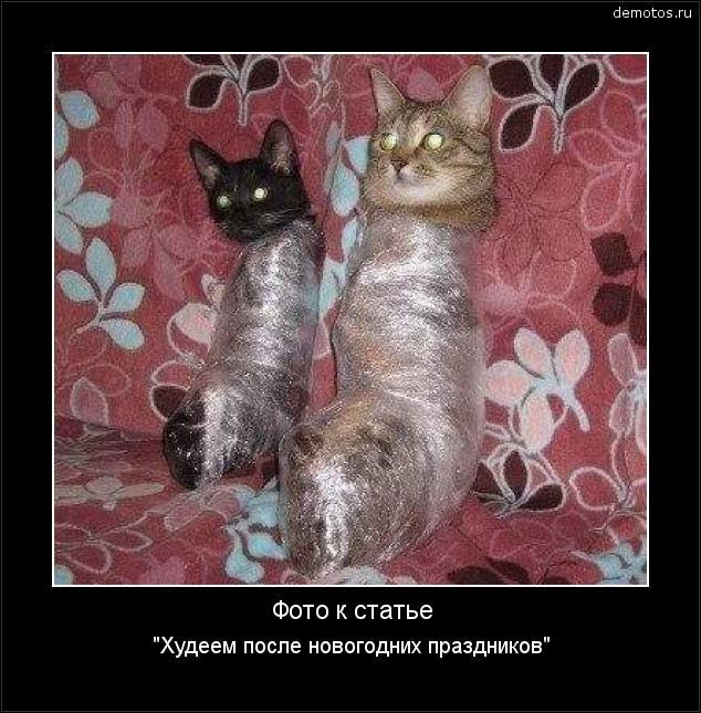 Когда кошку вяжут с котом