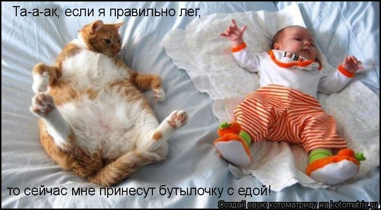 изображение: Та-а-ак, если я правильно лег, то сейчас мне принесут бутылочку с едой! #Котоматрицы