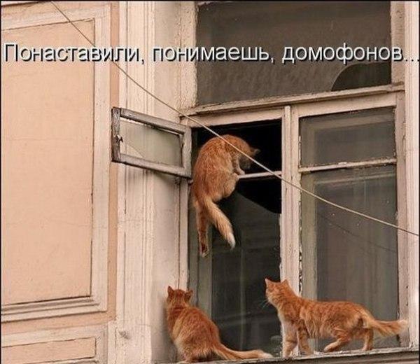 изображение: Понаставили, понимаешь, домофонов... #Котоматрицы