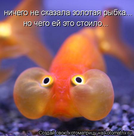 изображение: Ничего не сказала золотая рыбка... но чего ей это стоило...... #Котоматрицы