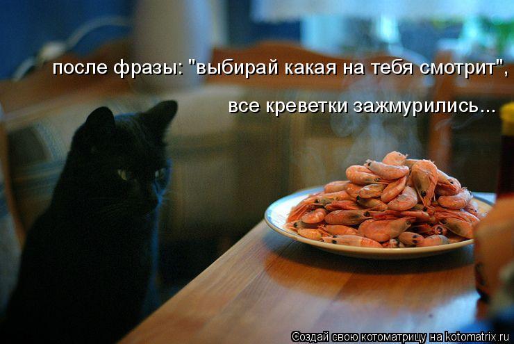 изображение: После фразы: 'выбирай какая на тебя смотрит',...все креветки зажмурились... #Котоматрицы