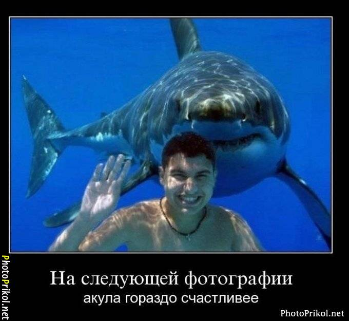На следующей фотографии акула гораздо счастливее | #прикол