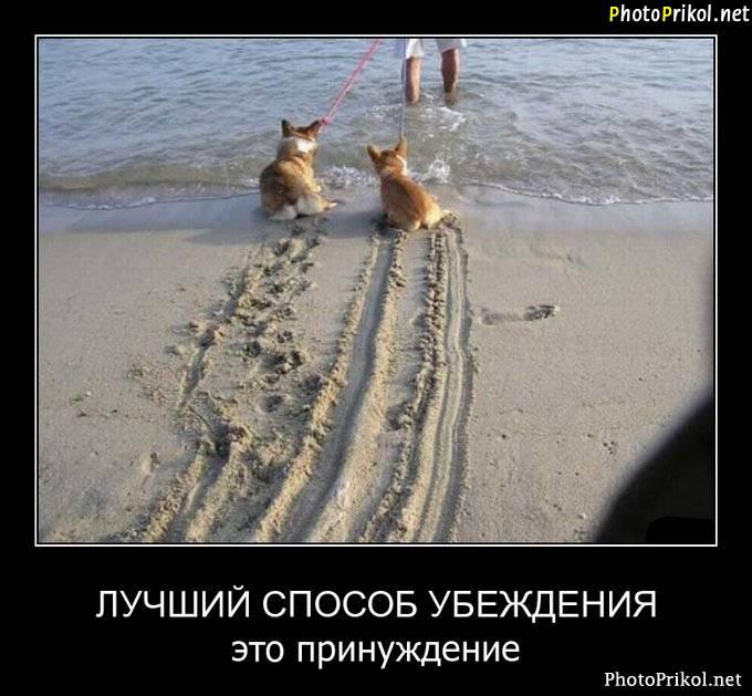 изображение: Лучший способ убеждения - это принуждение #Прикол