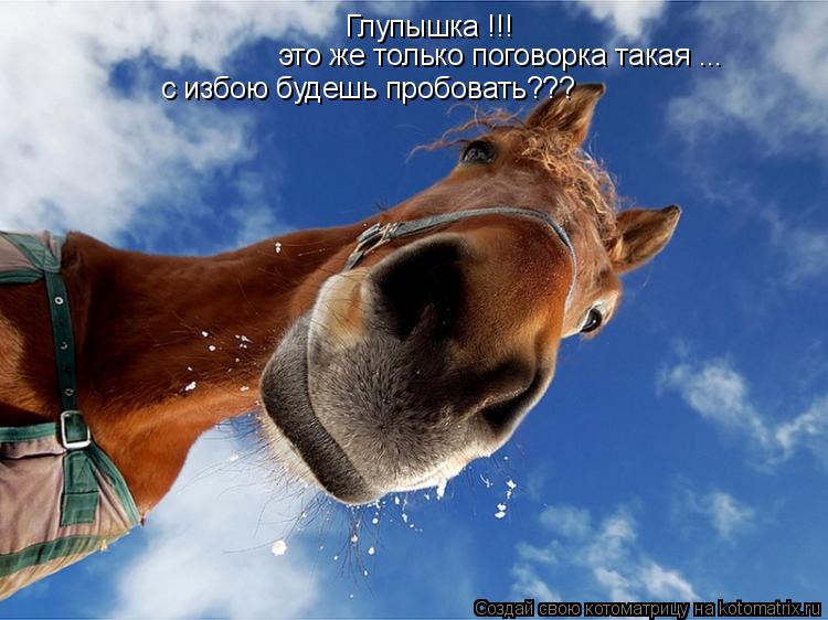 изображение: Глупышка !!! это же только поговорка такая ... с избою будешь пробовать???... #Котоматрицы