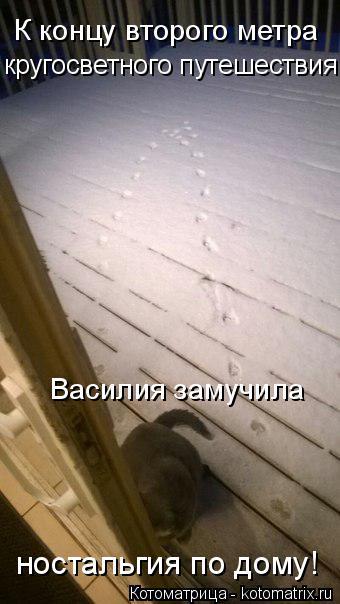 изображение: К концу второго метра кругосветного путешествия Василия замучила... ностальгия по дому! #Котоматрицы