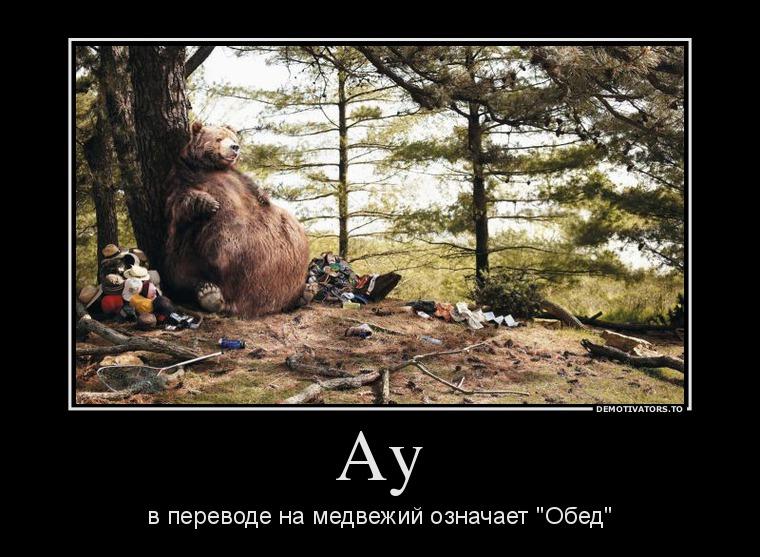 изображение: Ау в переводе на медвежий означает 'Обед' #Прикол