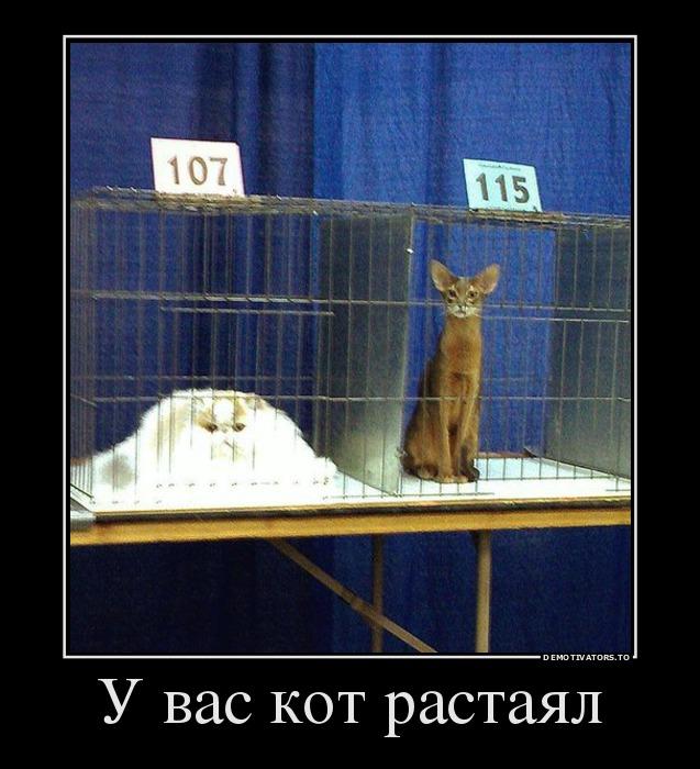 изображение: У вас кот растаял #Прикол