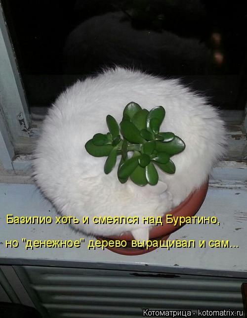 изображение: Базилио хоть и смеялся над Буратино, но 'денежное' дерево выращивал и сам...... #Котоматрицы