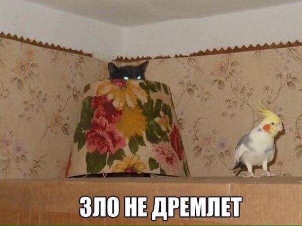 изображение: Зло не дремлет #Котоматрицы