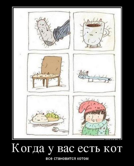 Когда у вас есть кот, все становится котом | #прикол