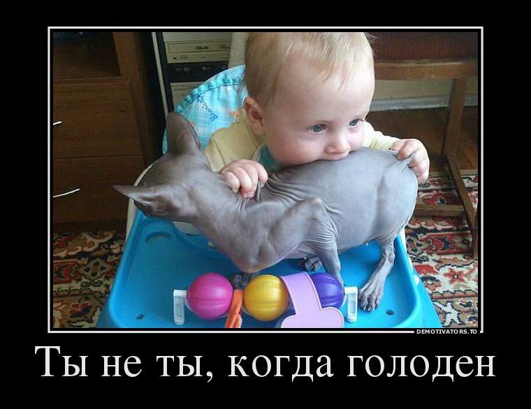 изображение: Ты не ты, когда голоден #Прикол