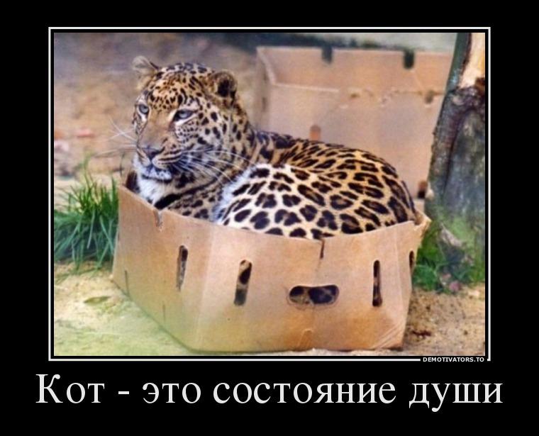 изображение: Кот - это состояние души #Прикол
