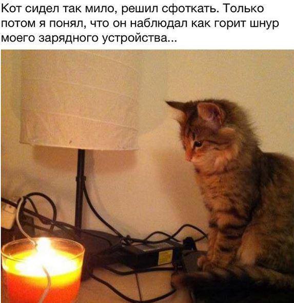 изображение: Кот сидел так мило, решил сфоткать. Только потом я понял, что он наблюдал, как горит шнур моего зарядного устройства #Котоматрицы