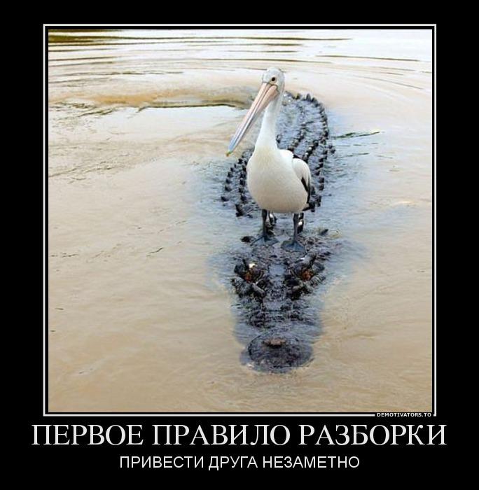 изображение: Первое правило разборки: привести друга незаметно #Котоматрицы
