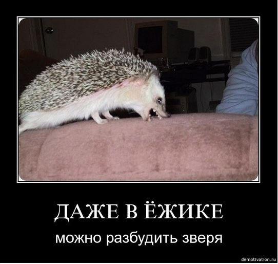 изображение: Даже в ежике можно разбудить зверя #Прикол