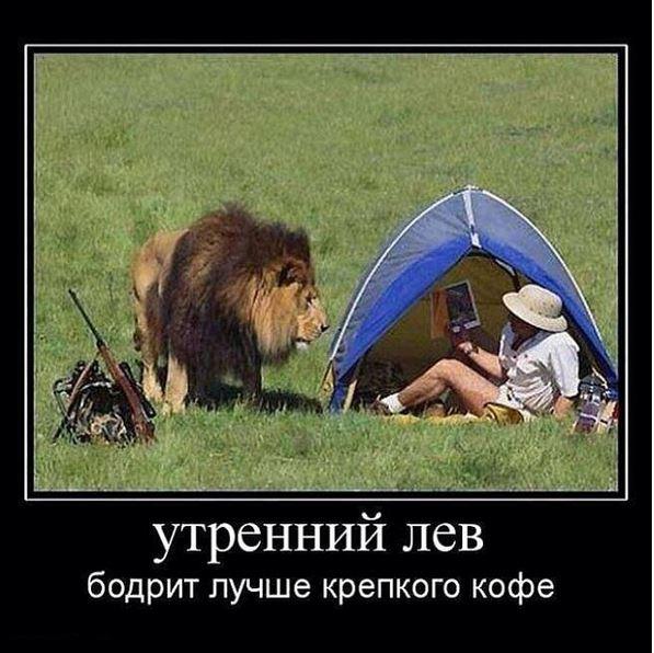 изображение: Утренний лев бодрит лучше крепкого кофе #Прикол