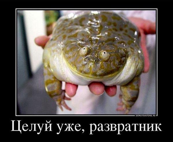 изображение: По мотивам русских народных сказок: Целуй уже меня! #Прикол