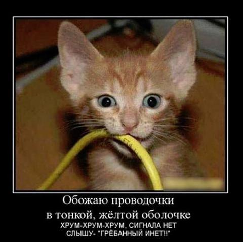 изображение: Кот грызет провода #Котоматрицы