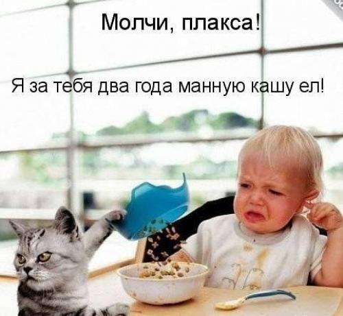 изображение: Молчи, плакса! Я за тебя 2 года манную кашу ел! #Котоматрицы