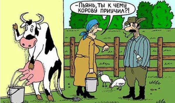 изображение: Пьянь, ты к чему корову приучил? #Прикол