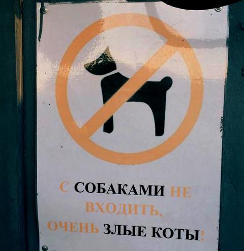 изображение: С собаками не входить, очень злые коты #Смешные объявления