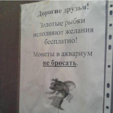 изображение: Дорогие друзья! Золотые рыбки исполняют желания бесплатно! Монеты в аквариум не бросать! #Смешные объявления