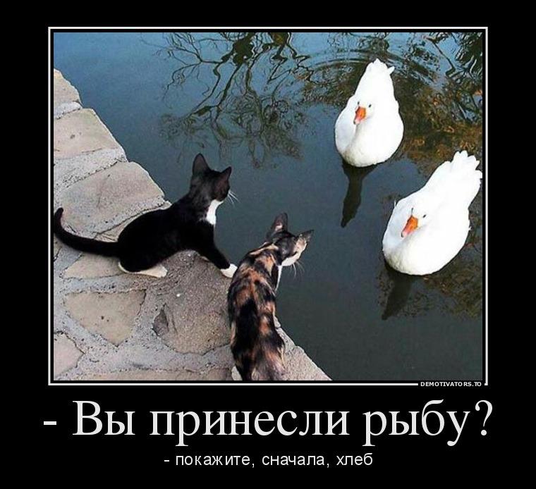 изображение: - Вы принесли рыбу? - покажите, сначала, хлеб #Котоматрицы