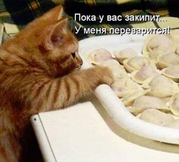 изображение: Пока у вас закипит, у меня переварится! #Котоматрицы