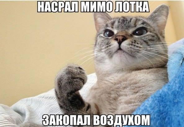 изображение: Насрал мимо лотка, закопал воздухом #Котоматрицы