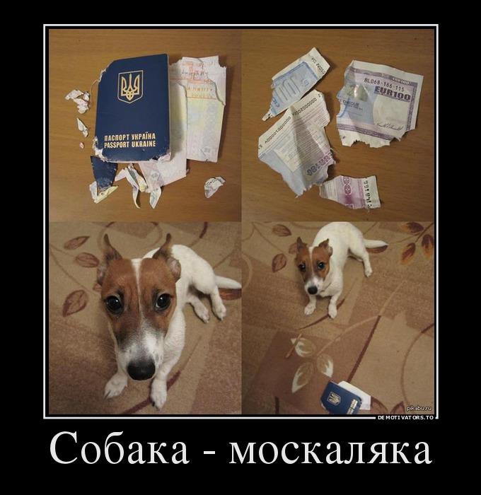 изображение: Собака - москаляка #Прикол