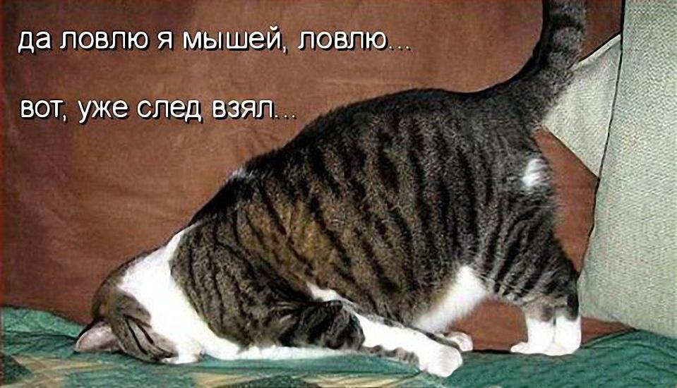 изображение: Да ловлю я мышей, ловлю... Вот, уже след взял... #Котоматрицы