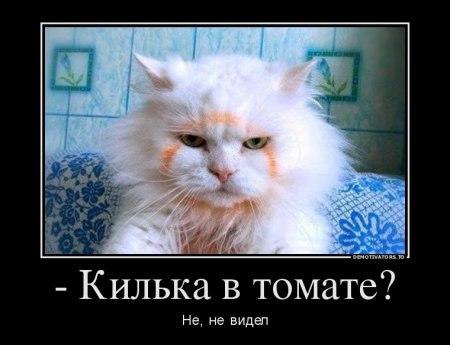 изображение: - Килька в томате? Нет, не видел #Котоматрицы
