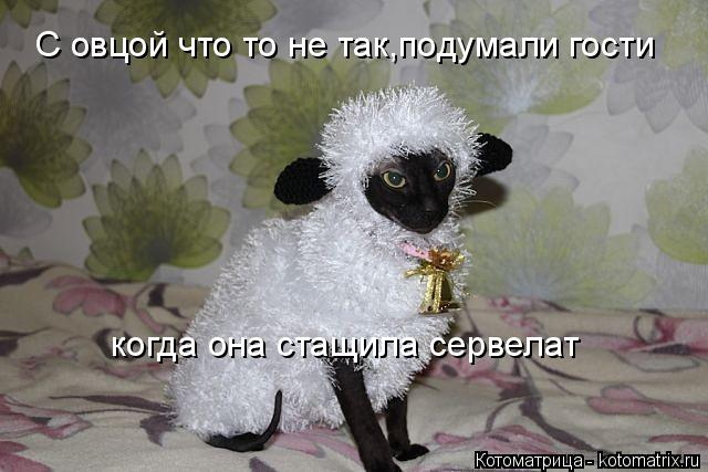 изображение: С овцой что то не так,подумали гости когда она стащила сервелат... #Котоматрицы