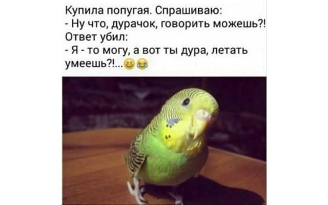 изображение: Купила попугая, спрашиваю: - Ну что, дурачок, говорить можешь?! Ответ убил: Я - то могу, а вот ты, дура, летать умеешь?!.. #Прикол