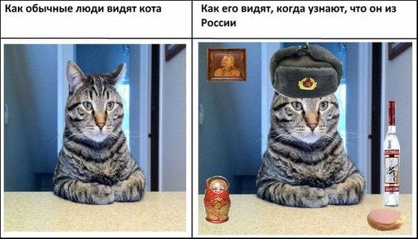 изображение: Как обычные люди видят кота. Как его видят, когда узнают, что он из России #Котоматрицы