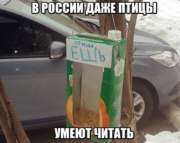 изображение: В России даже птицы умеют читать #Прикол