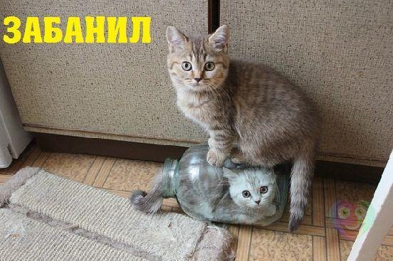 изображение: Забанил кота #Котоматрицы