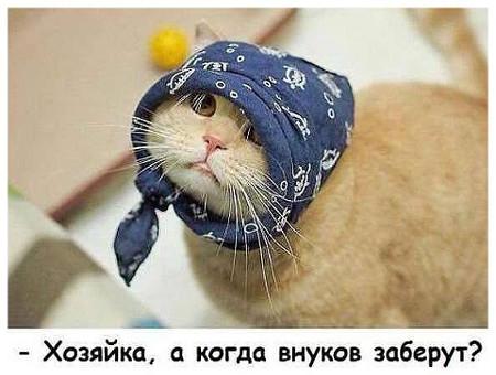 изображение: - Хозяйка, а когда внуков заберут? #Котоматрицы