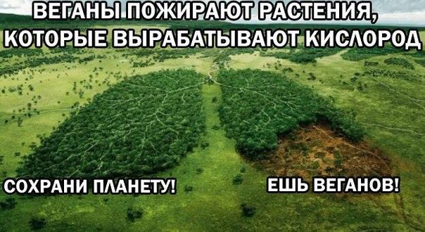 изображение: Веганы пожирают растения, которые вырабатывают кислород. Сохрани планету! Ешь веганов! #Прикол