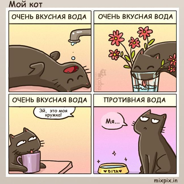 изображение: Почему кот пьет воду из-под крана #Котоматрицы