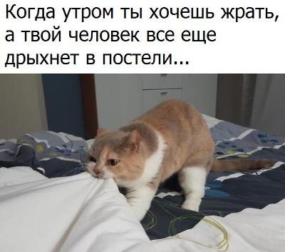 изображение: Когда утром ты хочешь жрать, а твой человек еще дрыхнет в постели #Котоматрицы