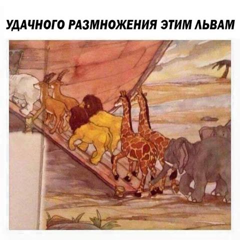 изображение: Удачного размножения этим львам! #Прикол