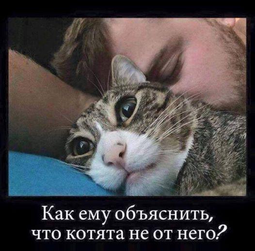 Как ему объяснить, что котята не от него? | #прикол