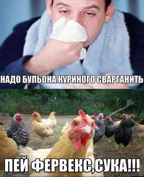 изображение: Надо бульона куриного сварганить.. - Пей фервекс, сука! #Прикол