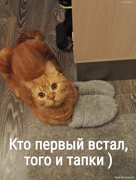 изображение: Кто первый встал, того и тапки ) #Котоматрицы