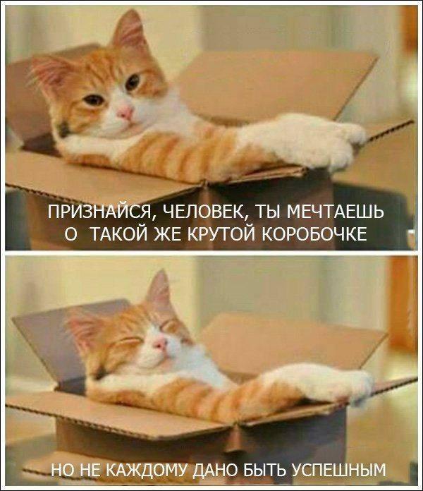 изображение: Признайся, человек, ты мечтаешь о такой же такой крутой коробке! #Котоматрицы