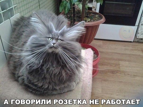У кота шерсть дыбом: - А говорили, розетка не работает... | #прикол