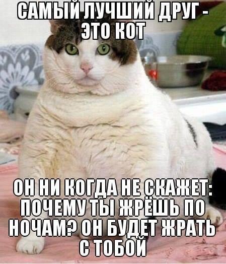 Самый лучший друг - это кот! Он никогда не скажет, почему ты жрёшь по ночам? Он будет жрать с тобой. | #прикол
