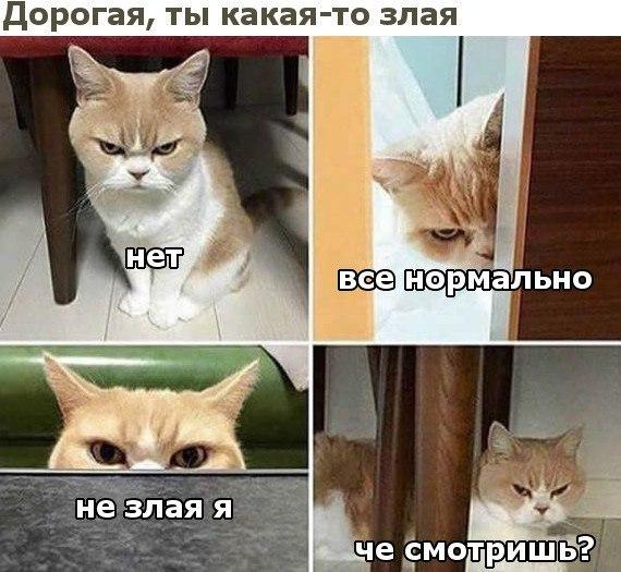 изображение: - Дорогая, ты какая-то злая. - Нет, все нормально, не злая я. Чё смотришь? #Котоматрицы