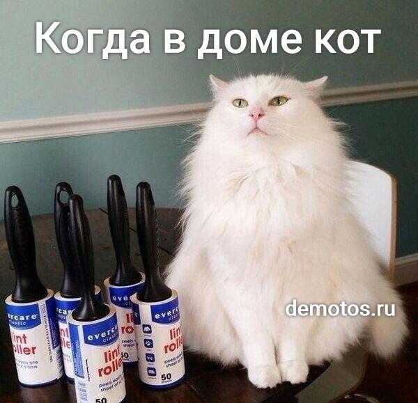изображение: Когда в доме кот #Котоматрицы